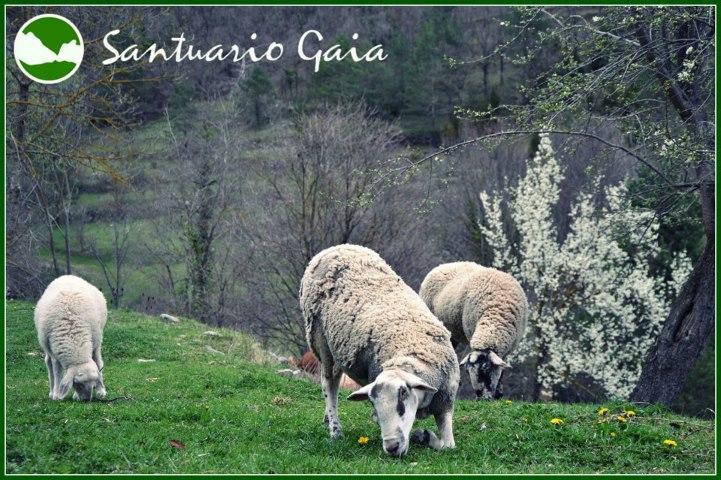 Santuario Gaia