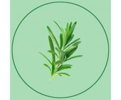 Romero Verde - Comida Vegana para llevar