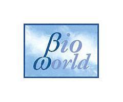 Calzado Bioworld - Vegano y ecológico